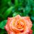Rose · Red · macro · gotas · de · agua · flor · flores - foto stock © marylooo