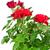 rosa · vermelha · gotas · de · água · macro · foto · primavera · abstrato - foto stock © marylooo