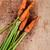 köteg · friss · répák · tiszta · narancs · levelek - stock fotó © marylooo