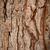 старые · соснового · текстуры · макроса · дерево · древесины - Сток-фото © marylooo