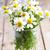 Geel · dahlia · witte · bloem - stockfoto © marylooo