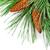 クリスマスツリー · ぼやけた · 光 · 背景 · 赤 · 金 - ストックフォト © marylooo