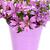 balde · fresco · primavera · flores · silvestres · isolado · branco - foto stock © marylooo