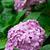 ピンク · 庭園 · 花 · 葉 · 夏 · 緑 - ストックフォト © marylooo