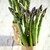 two bunches of fresh asparagus stock photo © marylooo