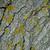 kuru · ağaç · havlama · doku · arka · soyut - stok fotoğraf © marylooo