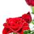 красную · розу · капли · воды · макроса · фото · весны · аннотация - Сток-фото © marylooo