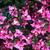 rosa · fiori · selvatico · impianto · fiore · natura - foto d'archivio © marysan