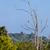 wild falcon sitting on the branch stock photo © massonforstock