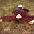 girl lying down on the grass stock photo © massonforstock