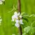 meyve · ağacı · çiçek · çiçek · bahar · ağaç · arka · plan - stok fotoğraf © massonforstock