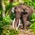 группа · слон · ходьбе · Серенгети · тело · зеленый - Сток-фото © massonforstock