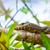 monitor · hagedis · boom · water · hoofd · eiland - stockfoto © massonforstock