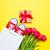 monte · amarelo · tulipas · bonitinho · dom · legal - foto stock © massonforstock