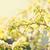 gyümölcsfa · tavasz · idő · idilli · napos · díszlet - stock fotó © massonforstock