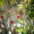 Rood · rozen · boeket · donkere · Rood · rose - stockfoto © massonforstock