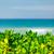 steen · caribbean · strand · wal · turkoois · zee - stockfoto © massonforstock