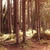 fir forest in carpathian stock photo © massonforstock