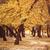 autumn forest stock photo © massonforstock
