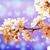 şube · mavi · gökyüzü · çiçek · ağaç · güzellik - stok fotoğraf © massonforstock