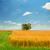 wiosną · krajobraz · samotny · drzewo · Hill · przeciwmgielne - zdjęcia stock © massonforstock