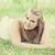Teen girl in the park. stock photo © Massonforstock
