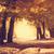 pad · voorjaar · bos · dawn · mistig · ochtend - stockfoto © massonforstock