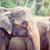 elephant group near a jungle stock photo © massonforstock