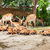 zoo herd of antelopes stock photo © master1305