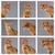 kedi · yavrusu · genç · kedi · eylem · su · turuncu - stok fotoğraf © master1305