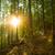 pine · bomen · zon · Blauw · star - stockfoto © master1305