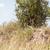 cheetah big tree stock photo © master1305