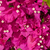 ピンク · エジプト · 美 · 青空 · 空 · 夏 - ストックフォト © master1305