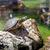 dois · zebras · lagoa · natureza · cabelo · preto - foto stock © master1305