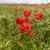 grupy · kwitnąć · łące · kwiaty · wiosną · charakter - zdjęcia stock © master1305