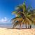 пляж · Тропический · остров · синий · воды · песок · ладонями - Сток-фото © master1305