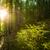 güzel · çam · ağaçlar · dağlar · yeşil · Ukrayna - stok fotoğraf © master1305
