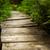 夏 · 風景 · 木 · 草で覆われた - ストックフォト © master1305