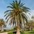 мнение · кокосового · ладонями · Черногория · дерево · пейзаж - Сток-фото © master1305