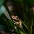 zöld · fa · béka · portré · színes · fa · állat - stock fotó © master1305