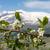 dorp · Noorwegen · bergen · hemel · boom · gebouw - stockfoto © master1305