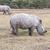 Safari - rhinos stock photo © master1305