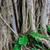 árvore · raízes · folha · beleza · rede · ramo - foto stock © master1305
