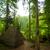 pino · alberi · nebbia · alto · legno · foresta - foto d'archivio © master1305