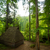groene · heuvel · bomen · pine · klein - stockfoto © master1305
