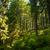 красивой · соснового · деревья · гор · зеленый · Украина - Сток-фото © master1305