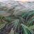 tahıl · çiftlik · Toskana · İtalya · manzara - stok fotoğraf © master1305