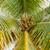 rijp · tropische · vrouw - stockfoto © master1305