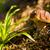 setas · verde · frescos · hoja · verde · hoja · suciedad - foto stock © master1305
