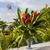 kırmızı · ebegümeci · çiçekler · doğal · yeşil · çiçek - stok fotoğraf © master1305